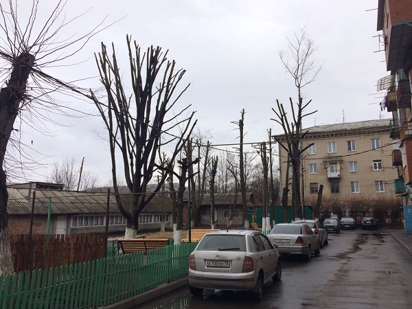 Обрезка деревьев во владикаказе